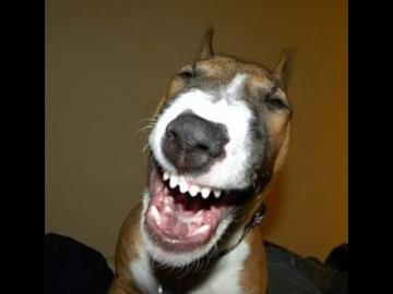 Топ 10 приколов про смешных собак