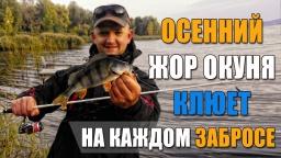 Как ловить окуня на спиннинг | Осенняя рыбалка на окуня
