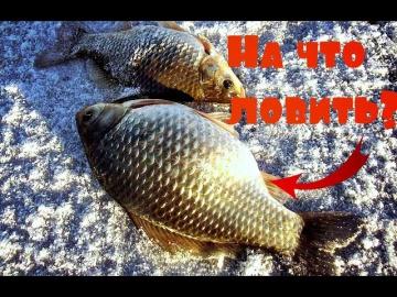 На что ловить крупного карася зимой Зимняя рыбалка на карася