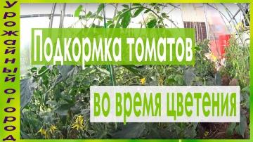 Урожайный огород Подкормки томатов во время цветения