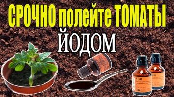 Урожайный огород ЙОД - СУПЕР СРЕДСТВО ДЛЯ РАССАДЫ ТОМАТОВ!
