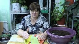 Юлия Минаева Крепкая Рассада отличный Урожай О рассаде перца