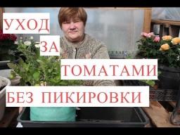 Юлия Минаева -  Выращивание Томатов без Пикировки. Рассада в Улитке. (25.03.2017)