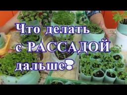 Юлия Минаева -  Что делать с рассадой дальше. Отчет по рассаде.