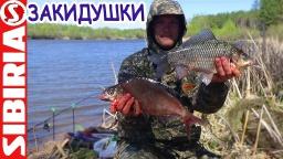 Рыбалка на  комбинированные  закидушки пружина + пенопласт + фидер | Весенняя рыбалка