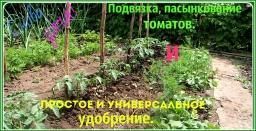 Ольга Уголок -  Подвязка и пасынкование томатов.Как подкармливать томаты и  другие культуры.