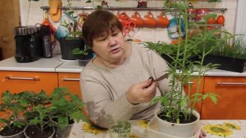 Юлия Минаева Необычный Способ Посева Томатов