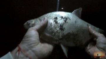 Вот это рыбалка!Бешенный клев леща.Ловля леща ночью на фидер в сентябре.