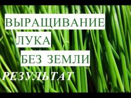 Юлия Минаева -  Результат Выращивания Лука без Земли. Волшебные Ящики.