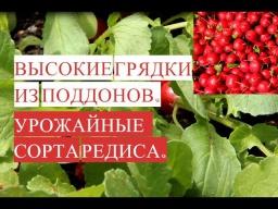 Юлия Минаева -  Высокая Грядка из Поддонов. Сорта Редиса. Выращиваем Редис Все Лето!
