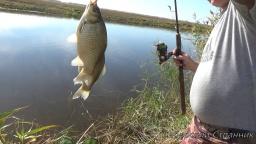 Рыбалка на крупного карася, на реке Чулым. Видео