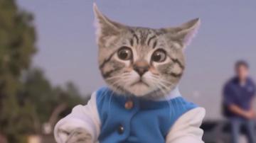 Приколы над котами Смешные коты