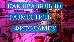 Юлия Минаева -  Фитолампы. Как правильно разместить фитолампу.