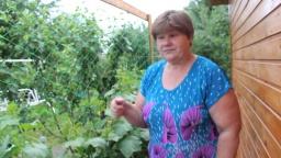 Юлия Минаева - Огурцы.Огурцы в мешка. Маленькие хитрости для большого урожая.