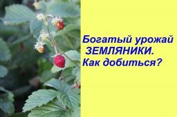 Юлия Минаева -  Богатый урожай ЗЕМЛЯНИКИ.Как добиться?