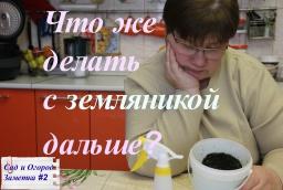 Юлия Минаева -  Что же делать с рассадой земляники дальше? Сад и огород.Заметка#2.