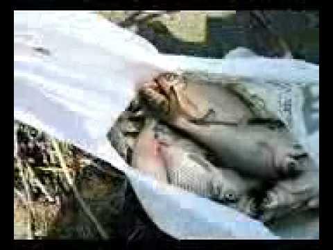 Вобла. Рыбалка в Астрахани.
