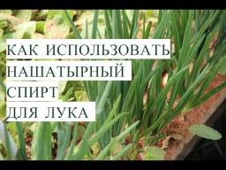 Юлия Минаева -  Нашатырный Спирт для Лука. Тонкости Успешной Посадки Лука. (20.05.2017)