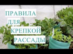 Юлия Минаева - Правила для Крепкой и Здоровой Рассады Капусты