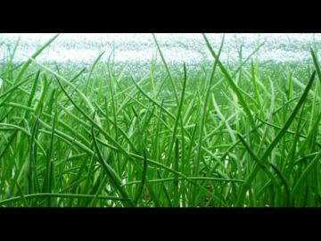 Урожайный огород СУПЕР СПОСОБ ВЫРАЩИВАНИЯ ЛУКА В ПАКЕТЕ БЕЗ ЗЕМЛИ!РЕЗУЛЬТАТ ВЫРАЩИВАНИЯ!
