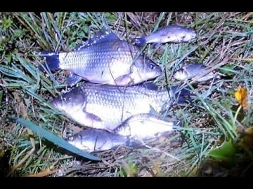 Ловля карася в сентябре. Рыбалка с удочкой (1 выезд)