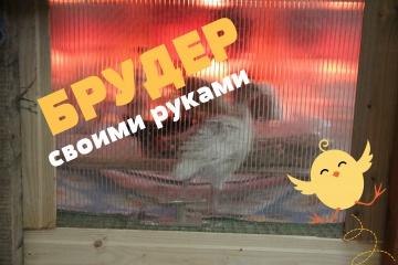 Юлия Минаева Брудер своими руками. Кормление цыплят и индюшат.