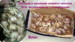 Ольга Уголок -  Маленький влог. Посадка зимнего чеснока. Хранение зимнего чеснока.