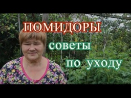 Юлия Минаева -  Помидоры в открытом грунте. Основные работы в июле.