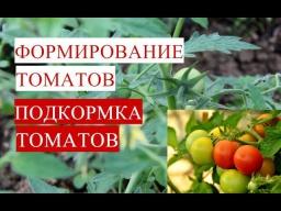Юлия Минаева -  Формирование Томатов. Подкормка Томатов.