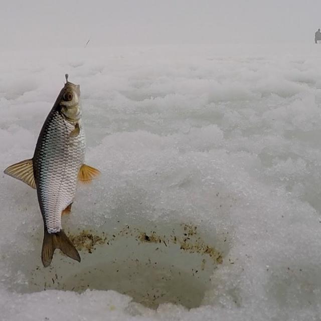 Зимняя рыбалка в Самарской области. Дубовский затон
