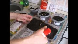 Ольга Уголок -  Посев семян томатов на рассаду.Как сеять семена томатов на рассаду.