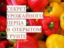 Юлия Минаева -  Выращивание Перца. Секрет Урожайного Перца в Открытом Грунте. (19.05.17)