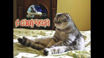 Приколы с котами и смешная озвучка животных–Ржака до слёз