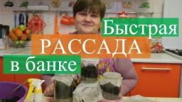 Юлия Минаева -  Рассада в банке. Новый способ, быстрые всходы.(19.03.16)