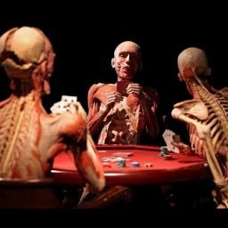 Анатомический музей Пластинариум в Германии: Выставка человеческих органов