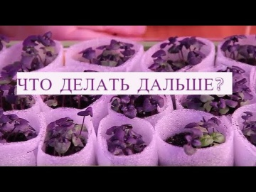 Юлия Миняева Базилик Взошел Что Делать Дальше
