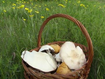 Охота за грибами 2016 часть 2(Дневник рыболова)