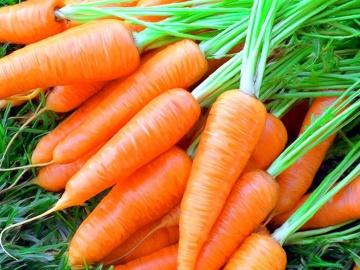 Огород где все растет 57.Морковь.Посадка моркови новым способом.