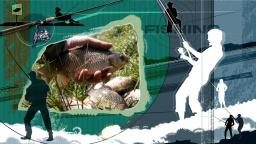 Ловля крупного карася на водохранилище. Рыбалка на крупного карася. Видео
