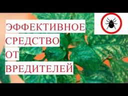 Юлия Минаева -  SOS Трипс Паутинный клещ Эффективное Средство от Вредителей