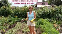 Ольга Уголок -  Дачный обзор. Что делаю на даче.