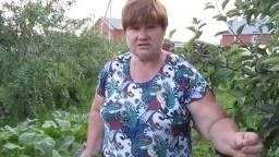 Юлия Минаева -  Эффективные советы по выращиванию КАБАЧКОВ.