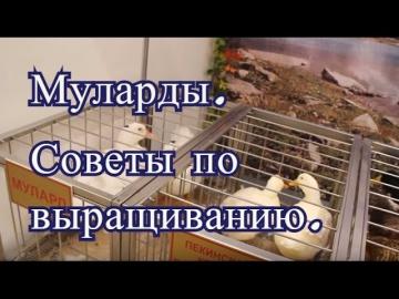 Юлия Минаева Муларды. Советы по выращиванию с Выставки Золотая Осень 2016.