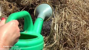 Урожайный способ посадки и выращивания кабачков урожайные грядки