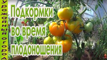 Урожайный огород Подкормки томатов во время плодоношения