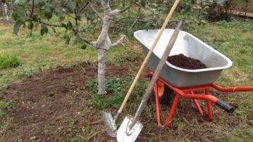 Огород где все растет 247. Осенний уход за плодовыми деревьями.