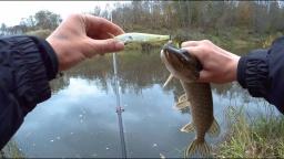 Микро -  рыбалка на микро - речке