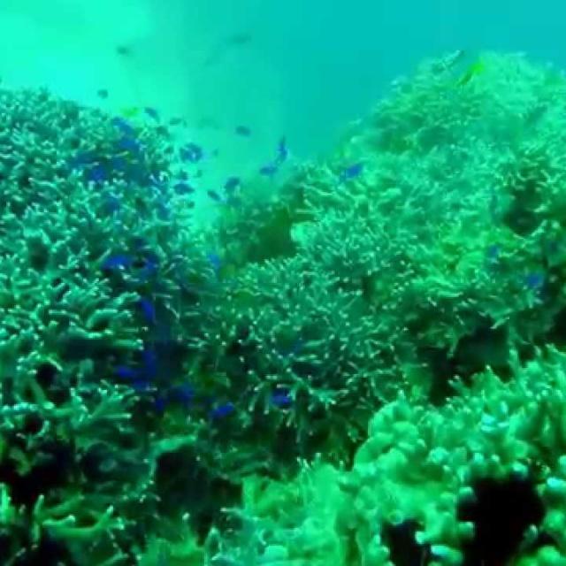 Филиппины 1 часть 2015. Diving Filippines Panglao 2015 part 1.