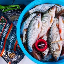 Рыбалка на Угличском водохранилище. Плотва, поплавок, фидер. День второй. [salapinru]