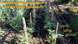 Ольга Уголок -  Супер подкормка для хорошего урожая томатов и всех растений.